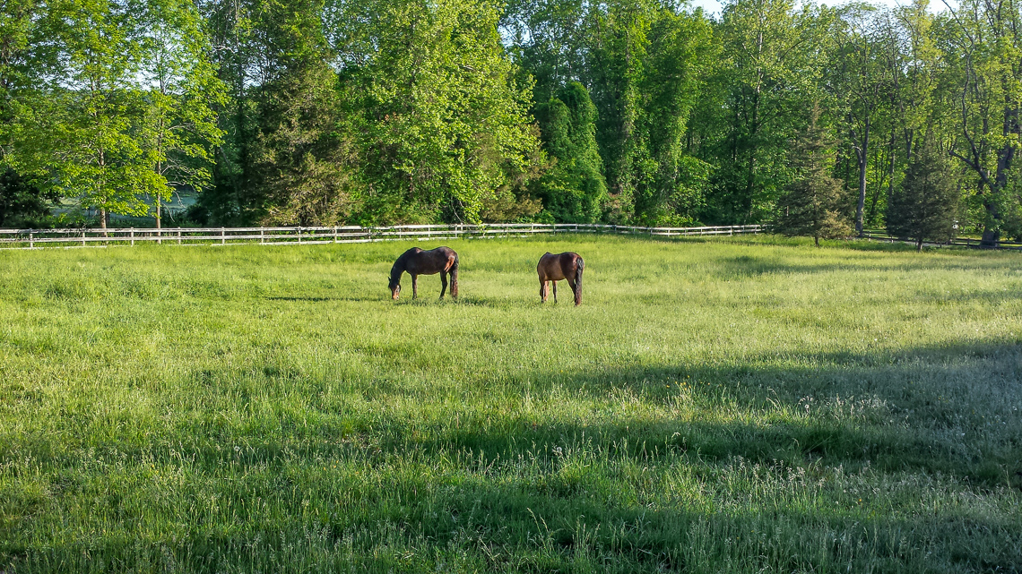 24 62 Potterstown Road — Property2Horses